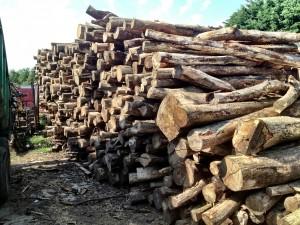 Stacked hardwood logs at Cross Keys Farm, Dagnall